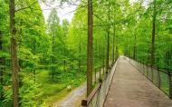 黄海森林公园门票 黄海森林公园在哪里