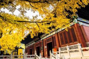2021北京紅螺寺春節有什么好玩的 北京紅螺寺春節游玩攻略