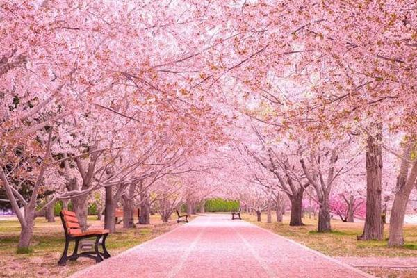 2021大连赏樱花的地方有哪些 大连赏樱花最佳时间