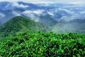 南山茶海旅游風景區怎么樣 南山茶海門票價格