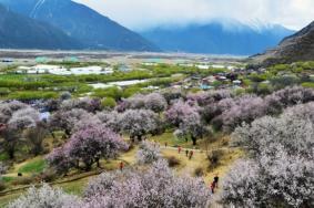 西藏桃花在什么地方 2021西藏桃花溝什么時