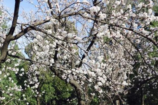 2021北京賞花的地方有哪些 北京賞花攻略