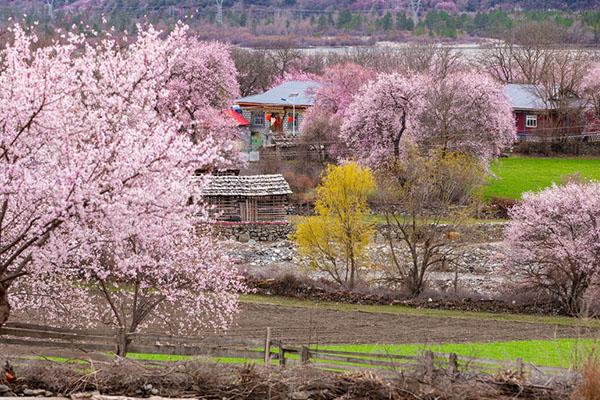 春季自駕旅游最佳去處 春季自駕游路線推薦2021