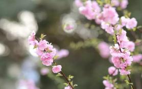 北京賞花時間表2021 北京5月賞花的地方有哪些