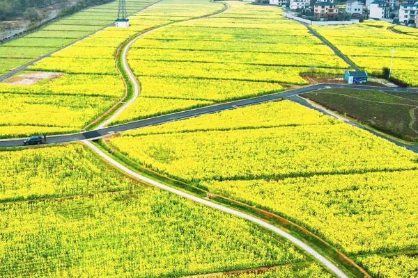 2021年四月溫州油菜花哪里好看-最佳拍攝點