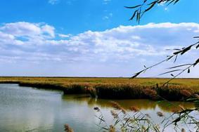 南大港湿地公园门票多少钱 什么时候去最好