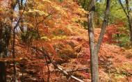 天桥沟森林公园门票价格-门票优惠政策