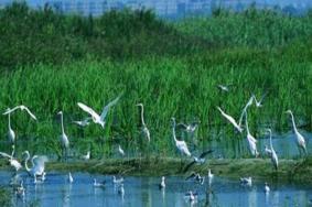 2021双台河口自然保护区旅游攻略 双台河口自然保护区门票交通及地址