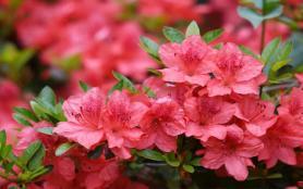 2021杭州植物園杜鵑花開放時間及游玩指南