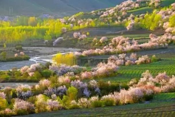 新疆四月赏花去哪里-赏花地址