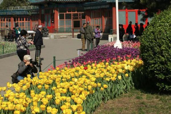 2021北京中山公園郁金香什么時候開-北京中山公園郁金香花展