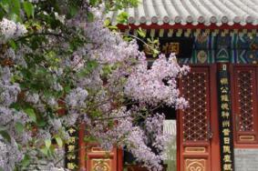 2021北京戒台寺丁香节时间及门票-活动内容