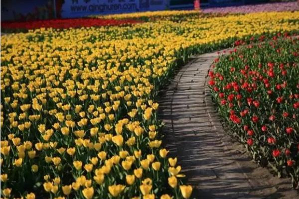 新疆五月赏花去哪里-景区介绍