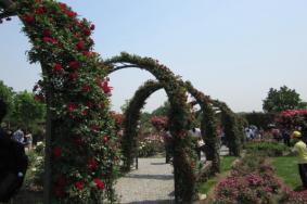 2021上海辰山植物园月季展时间-门票-交通攻略