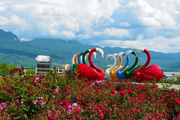 2021成都崇州七彩玫瑰莊園開放時間 成都七彩玫瑰莊園在哪里