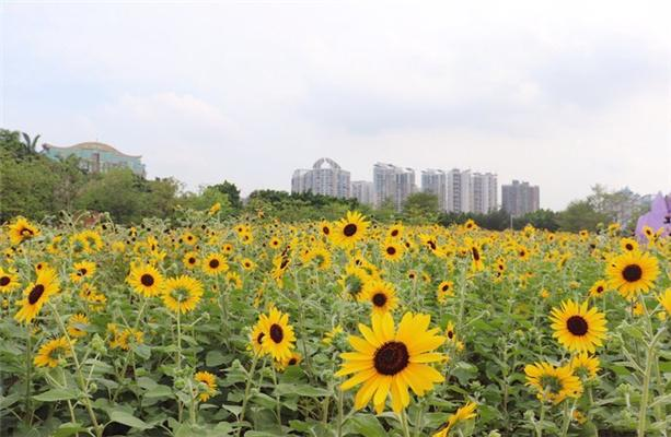 2021廣州宏城公園在哪怎么去天氣及游玩攻略