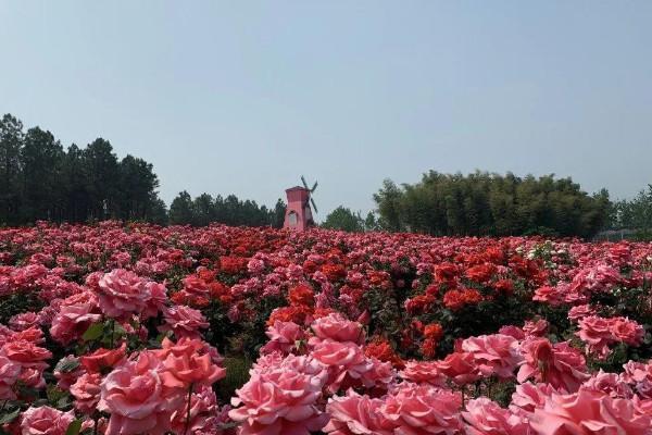 2021南京玫瑰園在哪里 南京玫瑰園門票多少錢