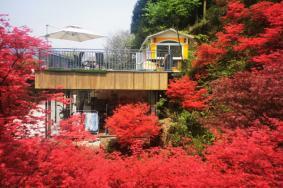 5月四川哪里有楓葉 春季四川紅葉觀賞地推薦