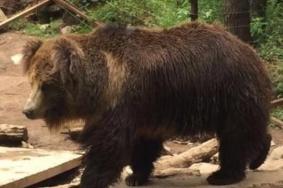 2021贵州森林野生动物园门票地址及游玩攻略