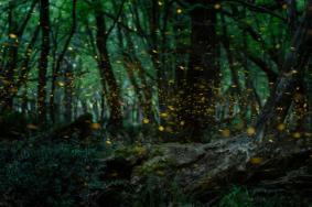 國內螢火蟲景點哪個最值得去-門票地址 螢火
