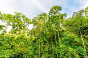 2021西双版纳热带雨林自然保护区游玩攻略