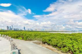 2021紅樹林海濱生態公園門票地址交通及游玩攻略