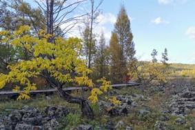 2021內蒙古達爾濱湖國家森林公園門票及地址