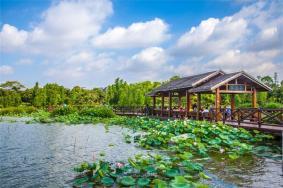 2021海珠湖公园开放时间地点门票及景区介绍