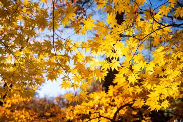 9月去哪里旅游比較好 秋季旅游國內最佳之地