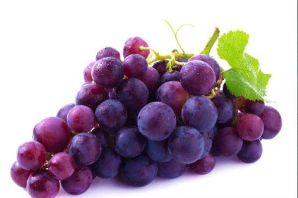 2021平度大澤山葡萄節什么時候開始