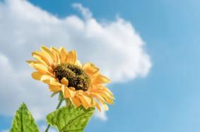 廈門園博苑向日葵在哪里-觀賞指南