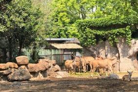 2021上海旅游節上海動物園門票活動