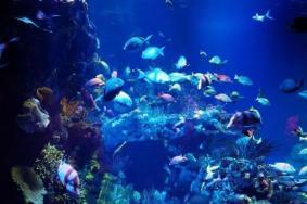 2021上海長風海洋世界半價活動時間