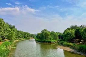 2021北京奧林匹克森林公園菊花展時間