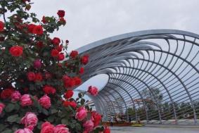 2021南阳世界月季大观园开放时间地址及门票价格