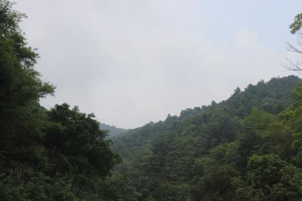 佛山必去的森林公园有哪些