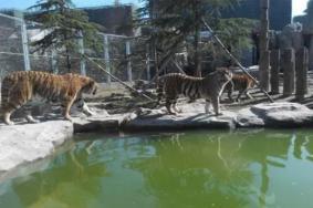 2021上海野生動物園門票多少一張 游園須知