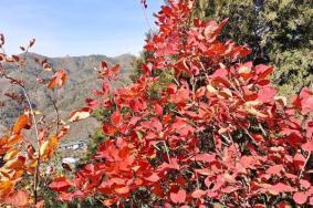 2021北京八达岭国家森林公园红叶最佳观赏时间