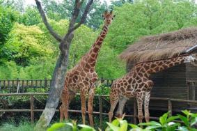 2021上海野生動物園年卡怎么辦理-價格
