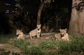 2021上海野生動物園夜場開放游玩攻略