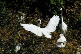 2021厦门园博苑金贝馆什么时候开放附观鸟指南
