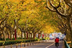 上海賞秋哪里人少景美 2021上海賞秋好去處