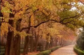2021南京秋季逛马路赏秋的最佳去处