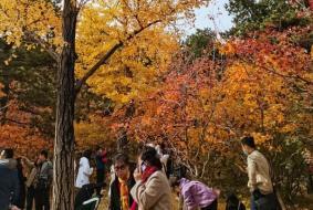 北京香山看红叶的交通路线