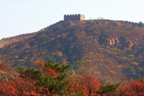 2021北京长城红叶最佳观看时间 北京长城红叶哪里最好看