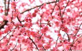 長沙看花的地方有哪些 長沙全年賞花攻略