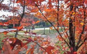 無錫看楓葉免費的地方有哪些