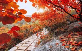 北京自駕游看紅葉哪里好 2021北京看紅葉最佳時間
